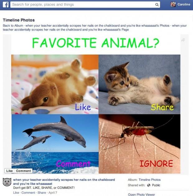 Facebook engagement - no low-quality memes