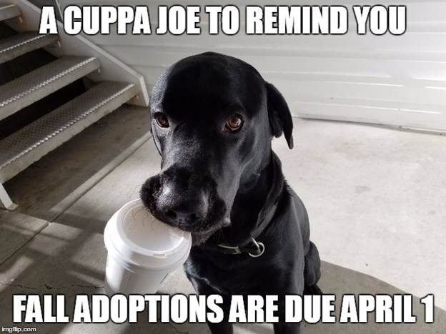 """The Ichabod Shop """"Memes"""" Business; Get Adoptions In"""