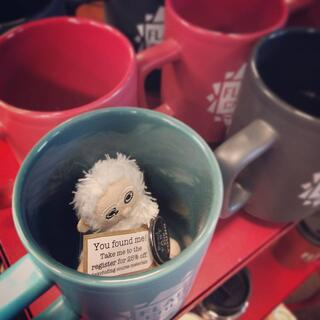 Plato can often be found hiding amongst Flagler College Bookstore's merchandise, including these mugs.